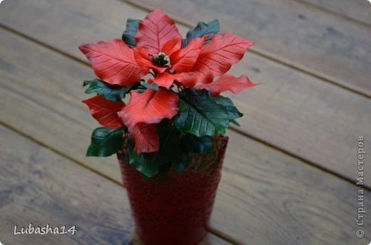 Мастер-класс Флористика Новый год Лепка Рождественский цветок пуансетия из холодного фарфора Фарфор холодный фото 1