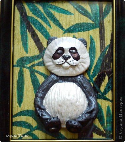Панда фото 3