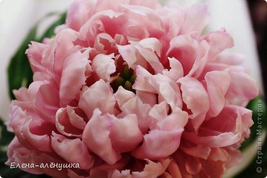 Пион-король цветов фото 1