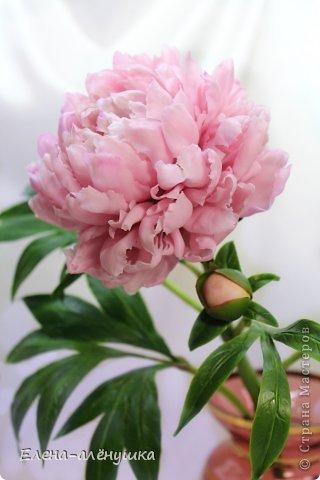 Пион-король цветов фото 2