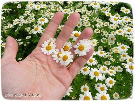 Весна продолжается! Если было интересно, буду очень рада погулять с вами ещё! фото 13