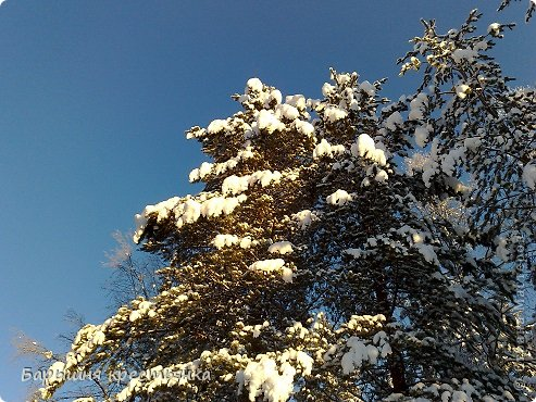 Солнечная погода. фото 10