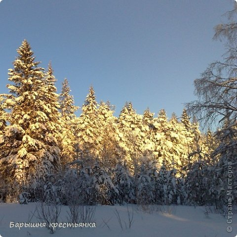 Солнечная погода. фото 14