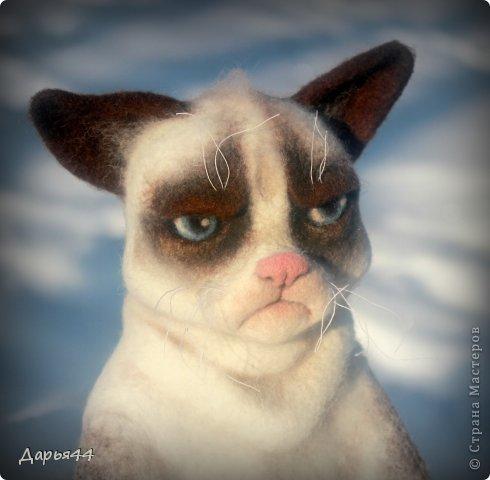 Сердитый котик фото 4