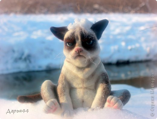 Сердитый котик фото 5