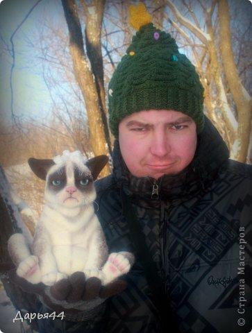Сердитый котик фото 2