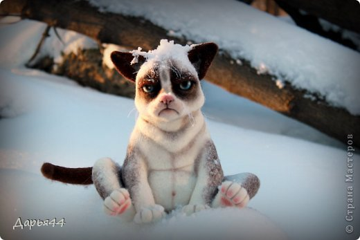 Сердитый котик фото 3