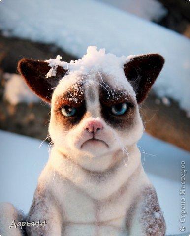 Сердитый котик фото 1