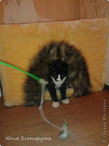 Захотелось мне для своего котейки домик сделать.А т.к.я с молотком на Вы -решила сделать его из пеноплекса)легко и тепло)) фото 6