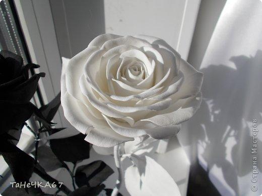 Доброго времени суток! доделала свой цветник.Вроде получился ничего. Рада всем,кто зашел в гости!!!Приятного просмотра!! фото 15