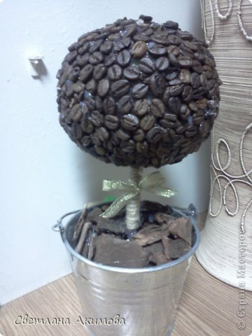 Кофейное деревце.