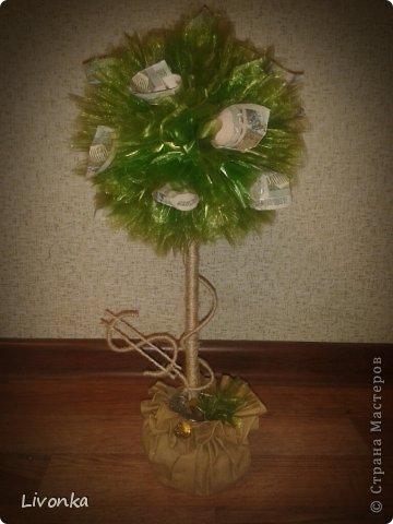 Моя коллекция денежных деревьев фото 2
