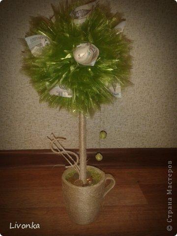 Моя коллекция денежных деревьев фото 3