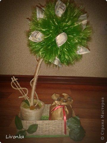 Моя коллекция денежных деревьев фото 1