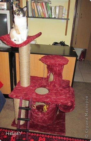 """Такой уголок для любимой кошечки можно сделать своими руками. Во-первых, сохраните свою мебель от кошачьих когтей, во-вторых, такой уголок станет любимым местом для игры и отдыха вашего любимца.  Для такой конструкции, по сравнению с ценами в магазине, от которых у меня потемнело в глазах, столько денег не понадобится. Я использовала разного диаметра трубки, например, картонные бобины, являющиеся основой для намотки упаковочного полиэтилена или др. производственных материалов. Грубая верёвка для обматывания этих трубок, плюшевый материал и несколько болтов и винтиков для скрепления деталей конструкции. Для основы каждого яруса я использовала ДСП. А верёвку приклеивала ПВА клеем. Вот и вся мудрость за мало денег. По собственному опыту могу сказать, что больше ярусов для вашей пумы будет более привлекательным, т.к. это любитель карабкаться как можно выше. Всё зависит от вашей фантазии и диспозиции места. У нас уголок получился около 1 м высотой, после того, как я добавила ещё один столб с """"постелью"""".... ;о) На некоторых фотографиях можете видеть первоначальный вид уголка. Думаю такой подарок вашей любимице очень даже понравиться. :)) фото 6"""
