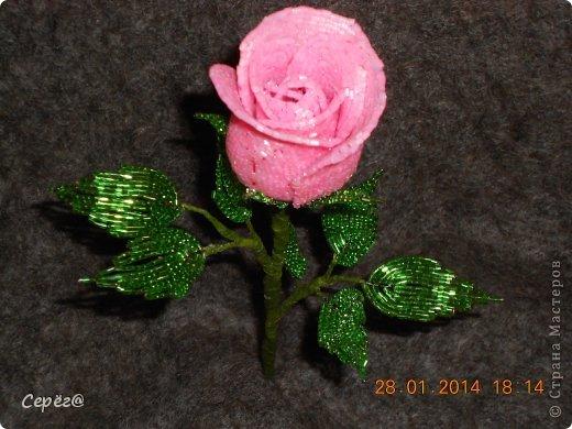 Новая роза в предыдущем стиле. фото 1