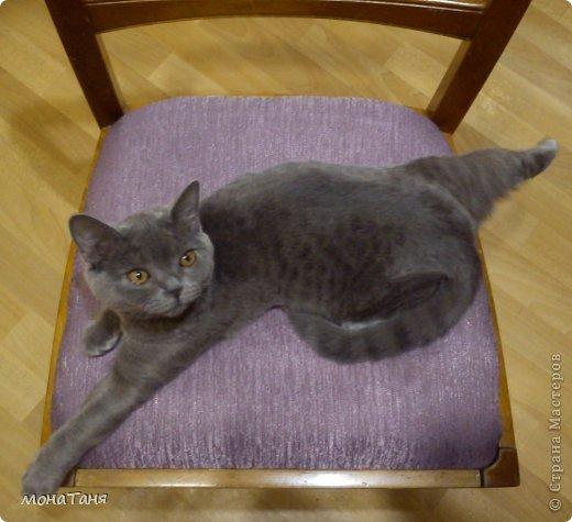 Здравствуйте!!! Уж очень мне понравилась экзотическая короткошерстная порода кошек. Лепила котёнка из ХФ по фото любимчика интернета котёнка Снупи из Китая.  фото 4