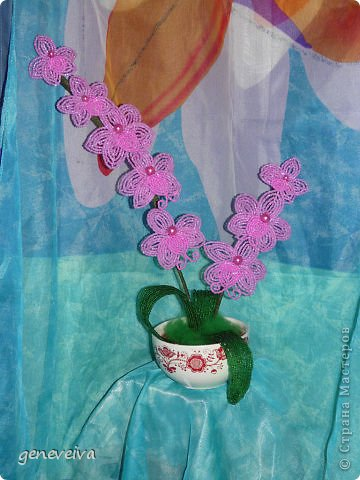 Моя первая орхидея фото 11