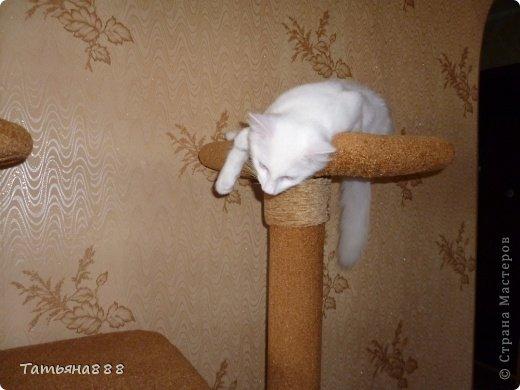 Лежанку для кота своими руками
