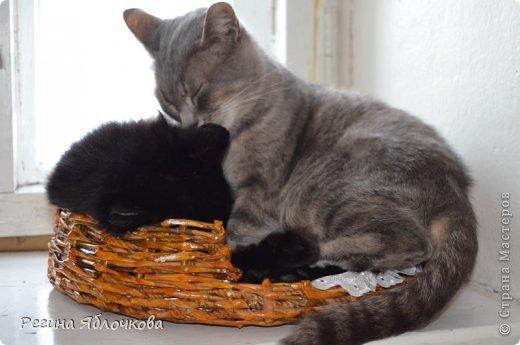 Вот мое новое плетение, тоже лежанка для кошек только уже на две персоны.Елизавета и Валентин остались довольны,а я рада что им понравилось)))) фото 1