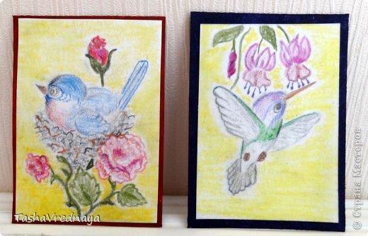 """Доброго веремени суток, дорогие соседи!  Серия """"Птахи"""" нарисована простым и  акварельными карандашами, фон- пастельным мелком.   Перерисовала  акварели Carolyn Shores   фото 3"""