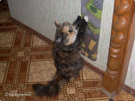 Здравствуйте дорогие мастерицы!!! Не давали мне покоя шторы на кухне, казались пустыми что ли...и вот накрутила я шариков и развесила по верху...но опять же не знаю оставлять ли...что то мне не нравится((( может вы подскажите? фото 15
