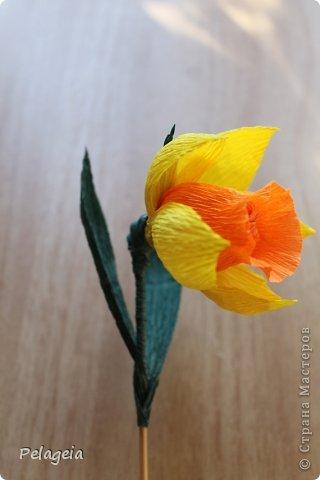 Мастер-класс Свит-дизайн 8 марта Моделирование конструирование Нарциссы МК Бумага гофрированная фото 17