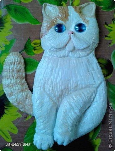 Здравствуйте!!! Уж очень мне понравилась экзотическая короткошерстная порода кошек. Лепила котёнка из ХФ по фото любимчика интернета котёнка Снупи из Китая.