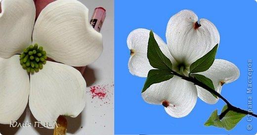 Мастер-класс Поделка изделие Лепка Цветущий кизил для букета панно или торта  Тесто соленое Фарфор холодный фото 16