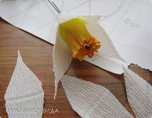 Мастер-класс Свит-дизайн 8 марта Моделирование конструирование Нарциссы Бумага гофрированная Продукты пищевые фото 8