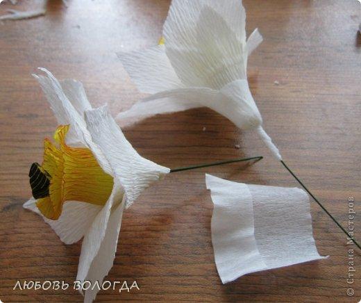 Мастер-класс Свит-дизайн 8 марта Моделирование конструирование Нарциссы Бумага гофрированная Продукты пищевые фото 11