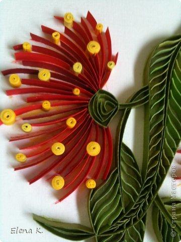 Цветы эвкалипта не очень крупные, но яркие и красивые. Цветёт эвкалипт и весной, и летом, и осенью. Оттенки цветков бывают разные, но самые заметные - красные. фото 2
