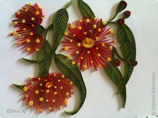 Цветы эвкалипта не очень крупные, но яркие и красивые. Цветёт эвкалипт и весной, и летом, и осенью. Оттенки цветков бывают разные, но самые заметные - красные. фото 6