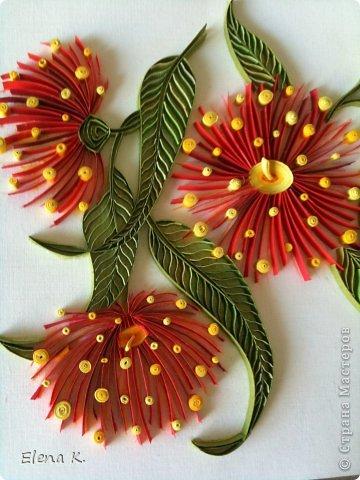Цветы эвкалипта не очень крупные, но яркие и красивые. Цветёт эвкалипт и весной, и летом, и осенью. Оттенки цветков бывают разные, но самые заметные - красные. фото 4