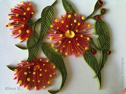Цветы эвкалипта не очень крупные, но яркие и красивые. Цветёт эвкалипт и весной, и летом, и осенью. Оттенки цветков бывают разные, но самые заметные - красные. фото 1