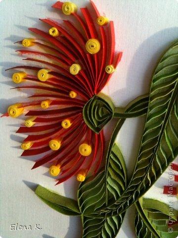 Цветы эвкалипта не очень крупные, но яркие и красивые. Цветёт эвкалипт и весной, и летом, и осенью. Оттенки цветков бывают разные, но самые заметные - красные. фото 5