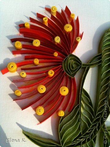 Цветы эвкалипта не очень крупные, но яркие и красивые. Цветёт эвкалипт и весной, и летом, и осенью. Оттенки цветков бывают разные, но самые заметные - красные. фото 7
