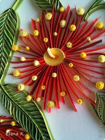Цветы эвкалипта не очень крупные, но яркие и красивые. Цветёт эвкалипт и весной, и летом, и осенью. Оттенки цветков бывают разные, но самые заметные - красные. фото 3