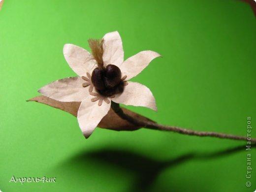 Обещала рассказать, как я делала цветочки для кофейной чашки https://stranamasterov.ru/node/733719. Вот сегодня наконец то сфотографировала процесс. Для изготовления такого цветка, нам понадобится: - акварельная бумага  - оберточная коричневая бумага - зерна кофе - проволока - шпагат - клей ПВА - горячий пистолет фото 1