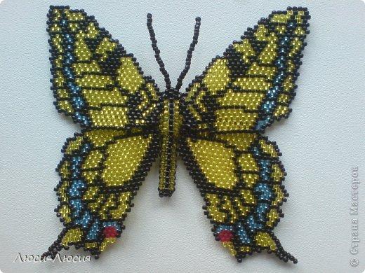 этой бабочки началось мое