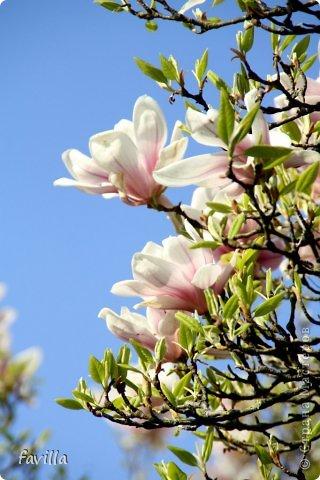 Весна цветущая. Много фото