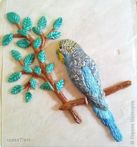 Слепила домашнего питомца - волнистого попугая Рики. фото 2