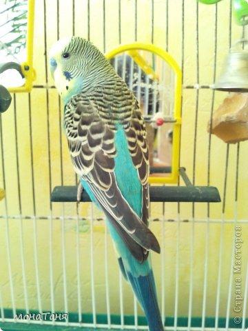 Слепила домашнего питомца - волнистого попугая Рики. фото 3