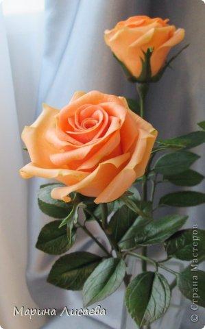 Здравствуйте, мои дорогие жители СМ! Я к вам сегодня с розами. Давно ничего не лепила, переключилась на другие виды творчества, а тут заказ. Ну и конечно вы- первые и самые компетентные судьи! фото 4
