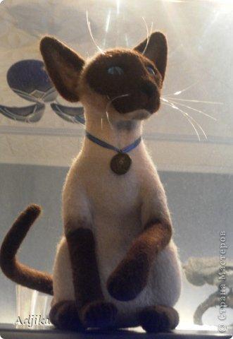 Здравствуйте!  Сегодня очередная портретка, сиамочка. Высота до кончиков ушей ок.27 см, хвост и передние лапы на каркасе, глазки сделаны вручную фото 1