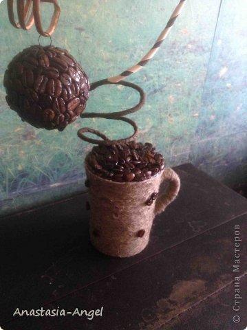 Моё первое кофейное дерево. фото 3