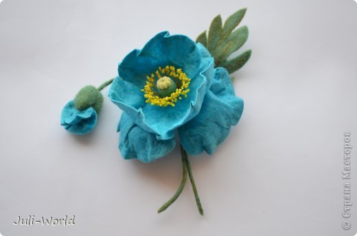 Меконопсис (голубой мак) фото 4
