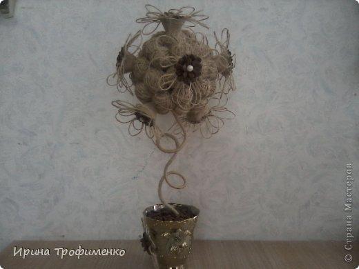 Фисташковое дерево фото 3