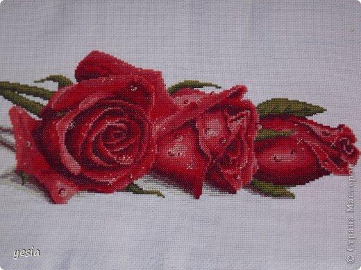 Розы в росе Канва: Аида 14 Нитки: Гамма (перевод из DMC) фото 1