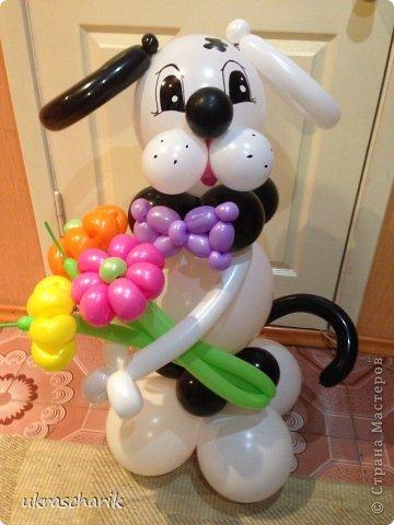 Мастер-класс Поделка изделие Твистинг МК собачка из шаров Шарики воздушные фото 1